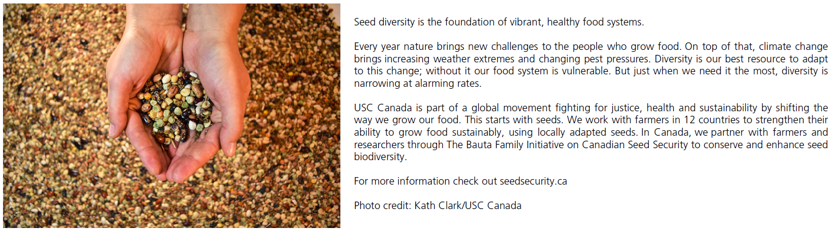 Cupped hands holding seeds. Photo credit: Kath Clark/USC Canada